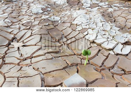 Close up Young sprout growing in cracked land