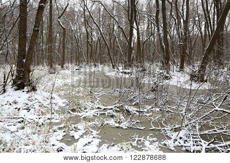 winter scene on bog in forest, take it in Ukraine