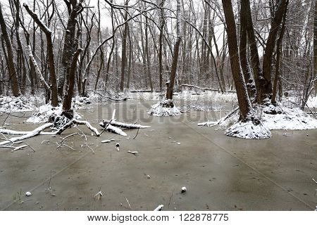 Scene with frozen bog in deep forest