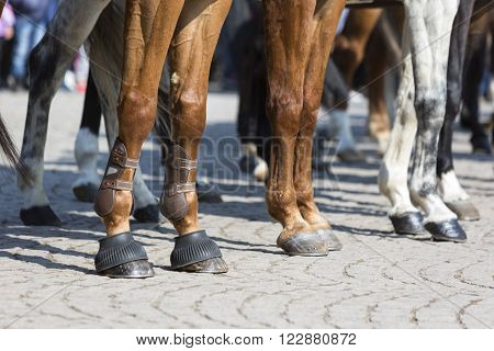 The legs of horses of Horse police units. Policemen and policewomen are participating in a parade at Saint Theodore's day.
