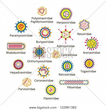 Classification of viruses. Enveloped viruses Nonenveloped viruses. Vector biology icons medical virus icons.