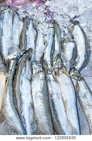 Selective focus and close up / Fresh anchovies on ice at the seafood booth