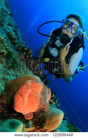 Frogfish and female scuba diver