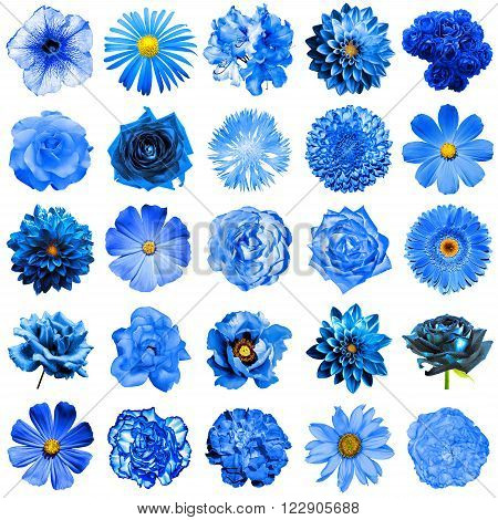 Mix Collage Of Natural And Surreal Blue Flowers 25 In 1: Peony, Dahlia, Primula, Aster, Daisy, Rose,