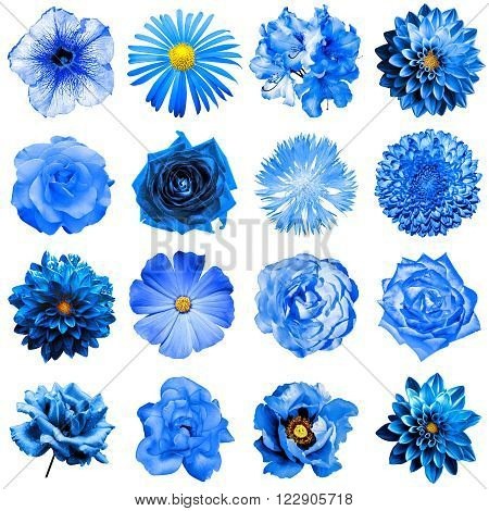 Mix Collage Of Natural And Surreal Blue Flowers 16 In 1: Peony, Dahlia, Primula, Aster, Daisy, Rose,