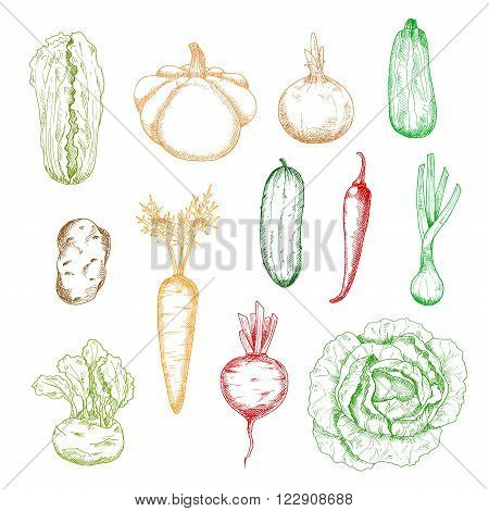 Sketches of carrot and onion, cabbages and potato, cucumber and chilli pepper, zucchini and beet, kohlrabi, scallion and pattypan squash vegetables. Kitchen interior, agriculture or recipe book design
