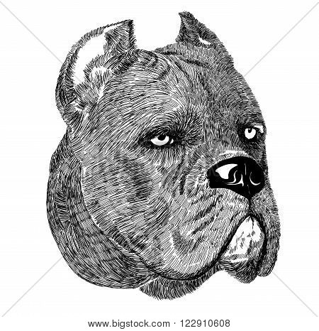 Cane Corso dog portrait vector illustration on white