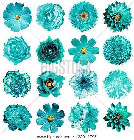 Mix Collage Of Natural And Surreal Turquoise Flowers 16 In 1: Peony, Dahlia, Primula, Aster, Daisy,