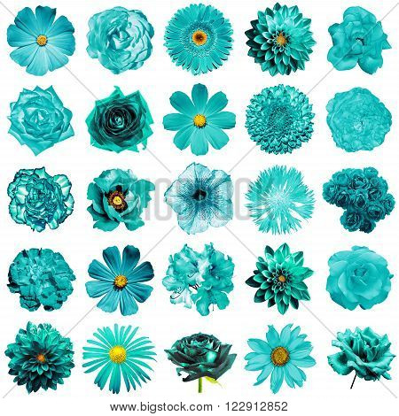 Mix Collage Of Natural And Surreal Turquoise Flowers 25 In 1: Peony, Dahlia, Primula, Aster, Daisy,