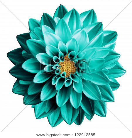 Surreal Dark Chrome Turquoise Flower Dahlia Macro Isolated On White