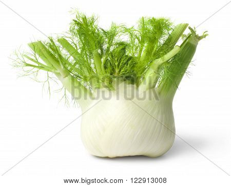 Fresh fennel closeup isolated on white background