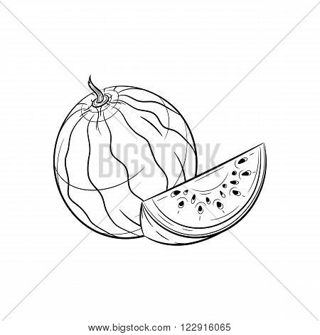 Watermelon: Vector hand drawn watermelon illustration isolated on white background - stock vector