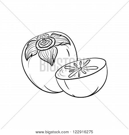 Persimmon. Vector hand drawn persimmon illustration isolated on white background - stock vector