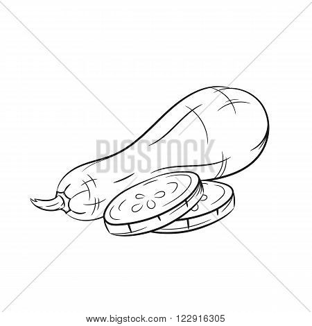 Squash. Vector hand drawn squash illustration isolated on white background - stock vector