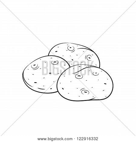 Potato. Vector hand drawn potato illustration isolated on white background - stock vector