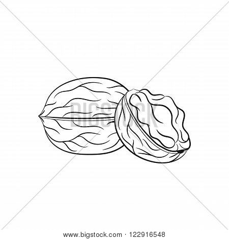 Walnut. Vector hand drawn walnut illustration isolated on white background - stock vector