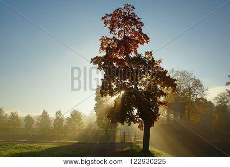 Misty autumn morning in Tsarskoye Selo. Sun and fog