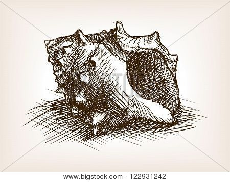 Seashell sketch style vector illustration. Old engraving imitation. Seashell hand drawn sketch imitation