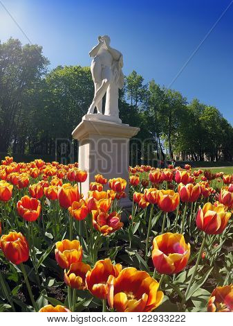 Spring tulips in park. Gatchina. Russia. in a sunny day