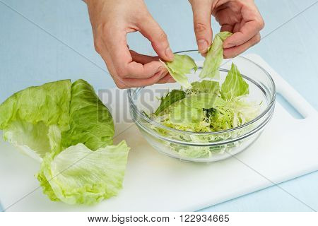Green Leaves Of  Salad