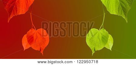 Red And Green Linden-tree Twigs On Multicolor Background