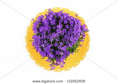 Beautiful campanula - bellflower on the yellow placemats on the white background.