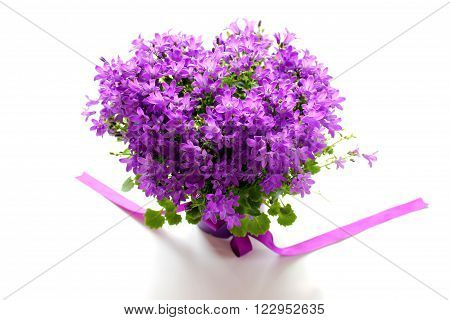 Beautiful campanula with ribbon - bellflower on the white background whit shadow.