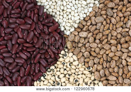 Dried beans clockwise from left Red Kidney beans also known as Red Giant, Haricot or Navy beans, brown Pinto beans and Black Eyed beans also called Black Eyed peas.
