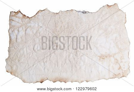 Piece of Wrinkled Paper with Burnt Edges Isolated on White Background