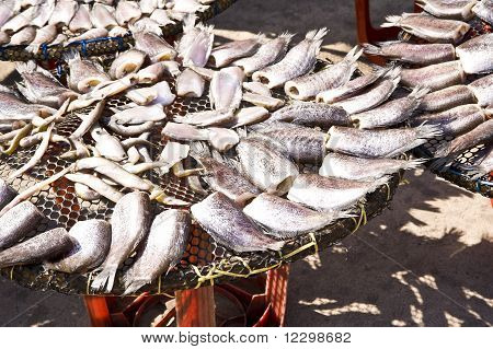 Gourami fish for sale