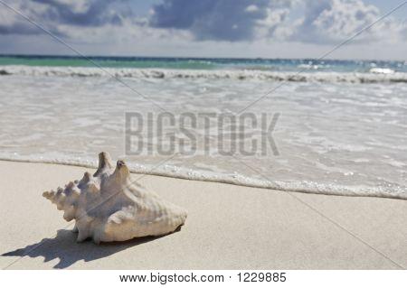 Escudo do mar na praia