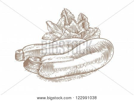 Drawing of two marrow squashes with flowers and fresh green leaves
