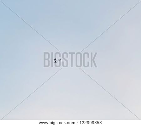 Cormorant Fly On Blue Sky Background
