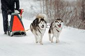 ������, ������: Sledge Dogs