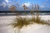 foto of sea oats  - Sea oats and surf in Madeira Beach Florida on Florida - JPG