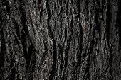 Old Rough Wood Texture. Wooden Texture. Wooden Background. Tree Texture. Tree Background. Crack Tree poster