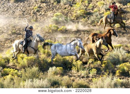 Wild_Cowboys