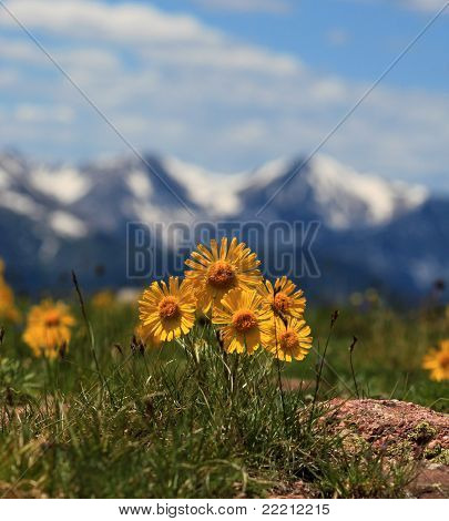 Bright Yellow Flowers and Mountains