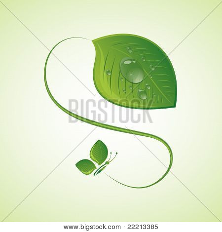 Green leaf with drops, vector illustration
