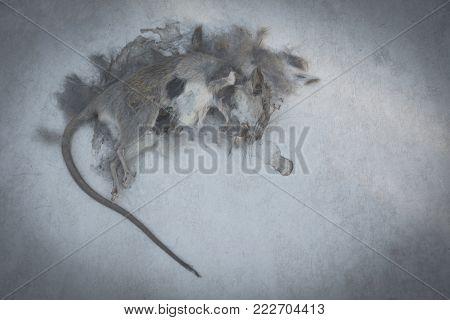 Dead rat mouse