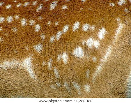 Deer Fur (Dama Dama)