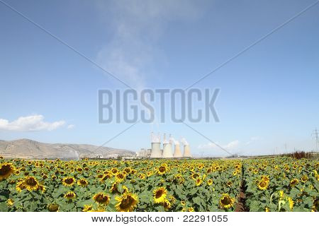 Sunflowers Field And Power Plant
