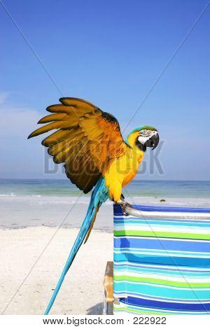 Macaw Beach
