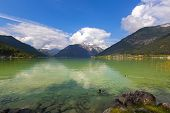 Male mallards swimming in crystal clear lake water of Achensee lake in blue green shade of fresh Tur poster