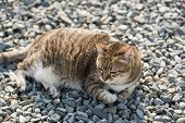 fat tabby cat sit on ground in the outdoor poster