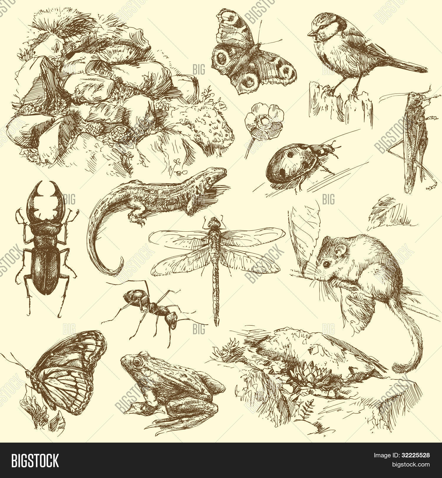 garden animals hand drawn set Stock Vector Stock Photos Bigstock