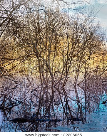 Bare Trees In Marshland
