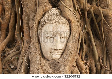the head of the sandstone buddha