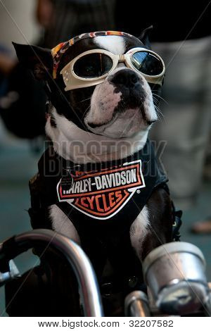 Cute motorcycle dog at Comic Con