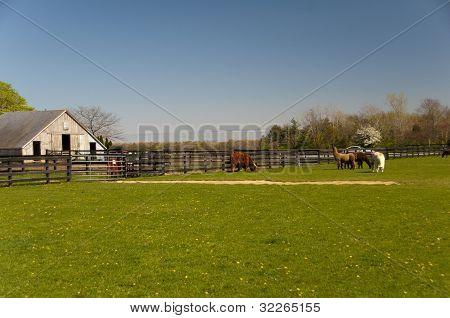 Farm 4391
